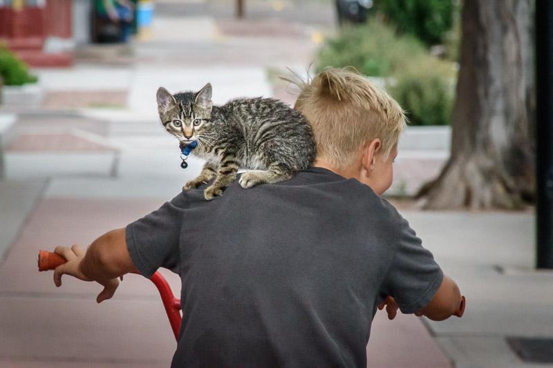 Kitten of boy's shoulders
