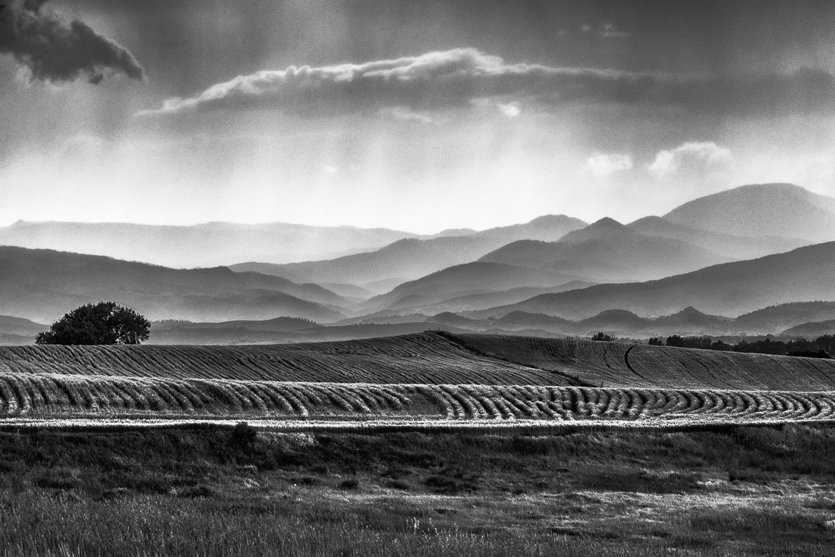 Fields at sunset, black & white