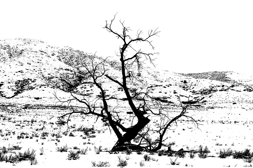 Very high contrast, pen and ink effect